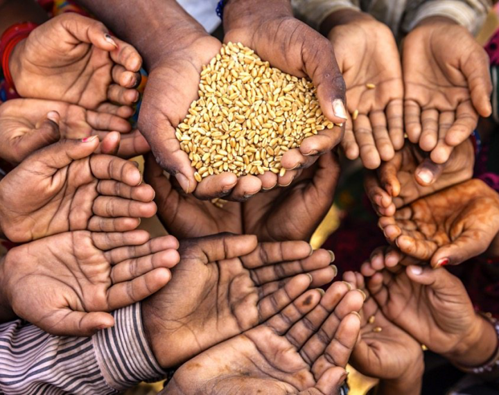 7 people gathered around another person with their hands out waiting to receive grain. Only the hands are shown.